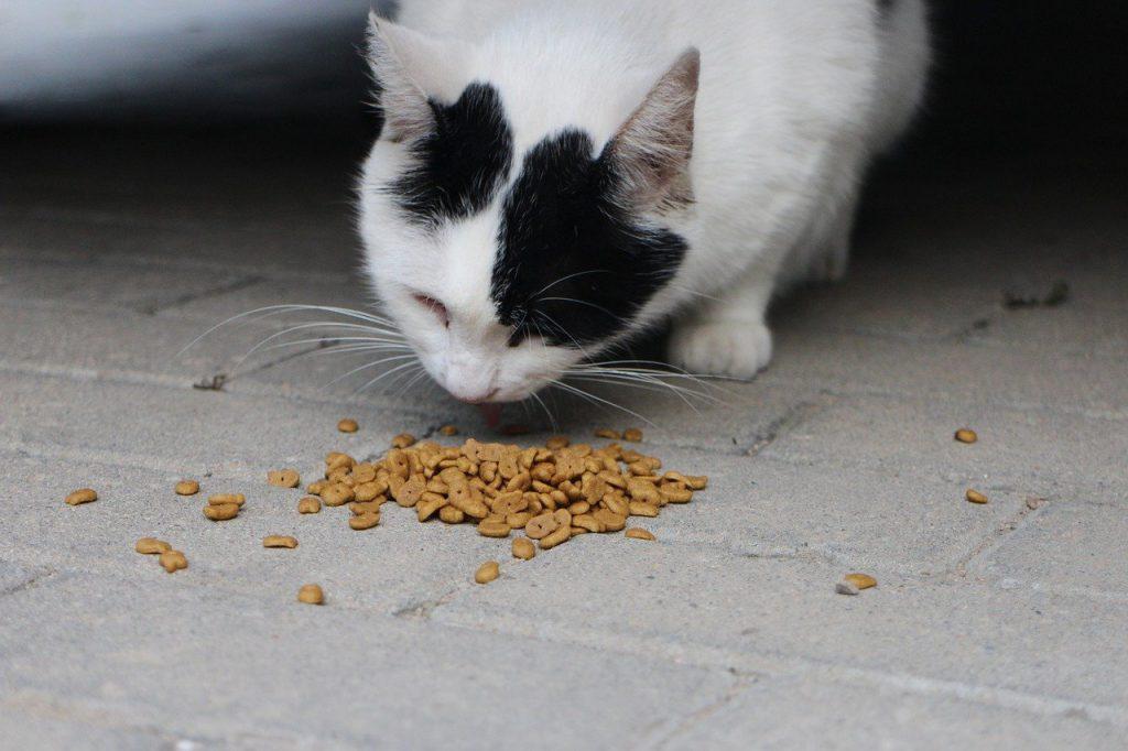 고양이 식기