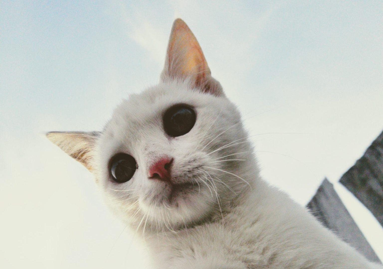 고양이 질병 종류, 자주 걸리는 것 TOP 3
