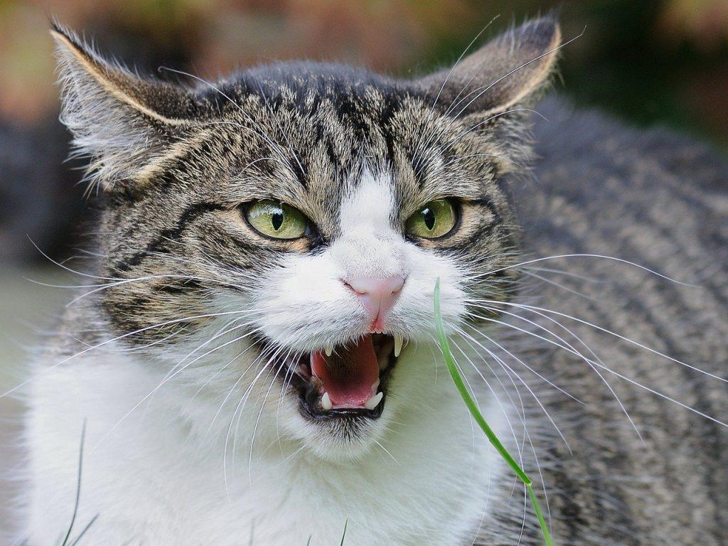 고양이가 마음의 상처
