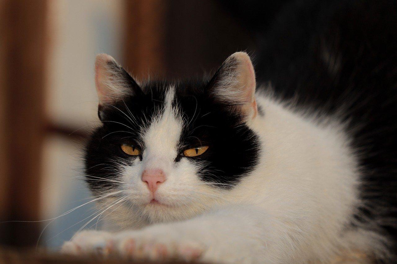 고양이가 마음의 상처 입었을 때 행동 4가지