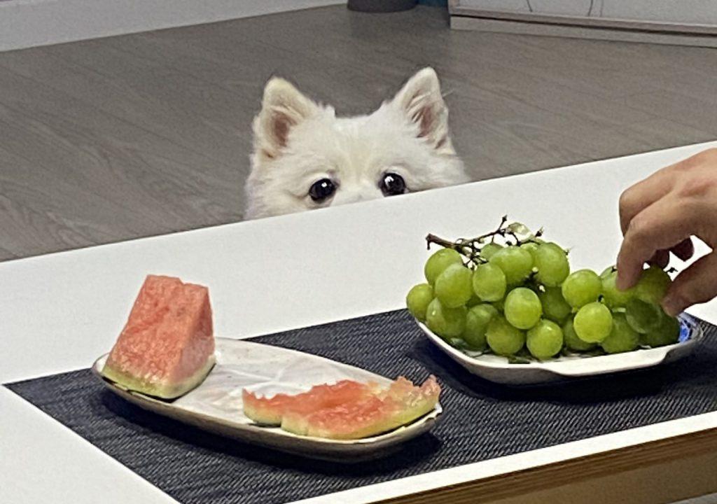 강아지 추석 음식