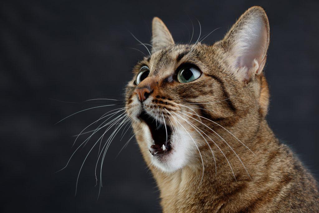 냄새 맡은 고양이