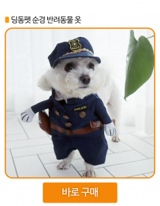 강아지 할로윈