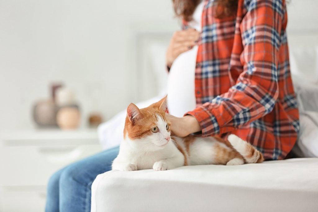 임신부가 고양이