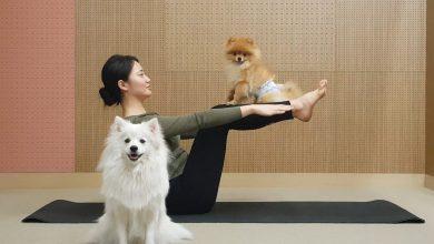 Photo of 강아지와 함께하는 도가 2편 – 복근운동
