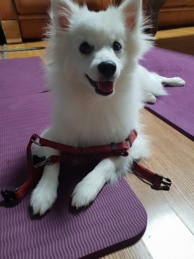 강아지 지능